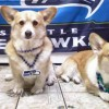Area Dogs Share Mixed Feelings on Super Bowl